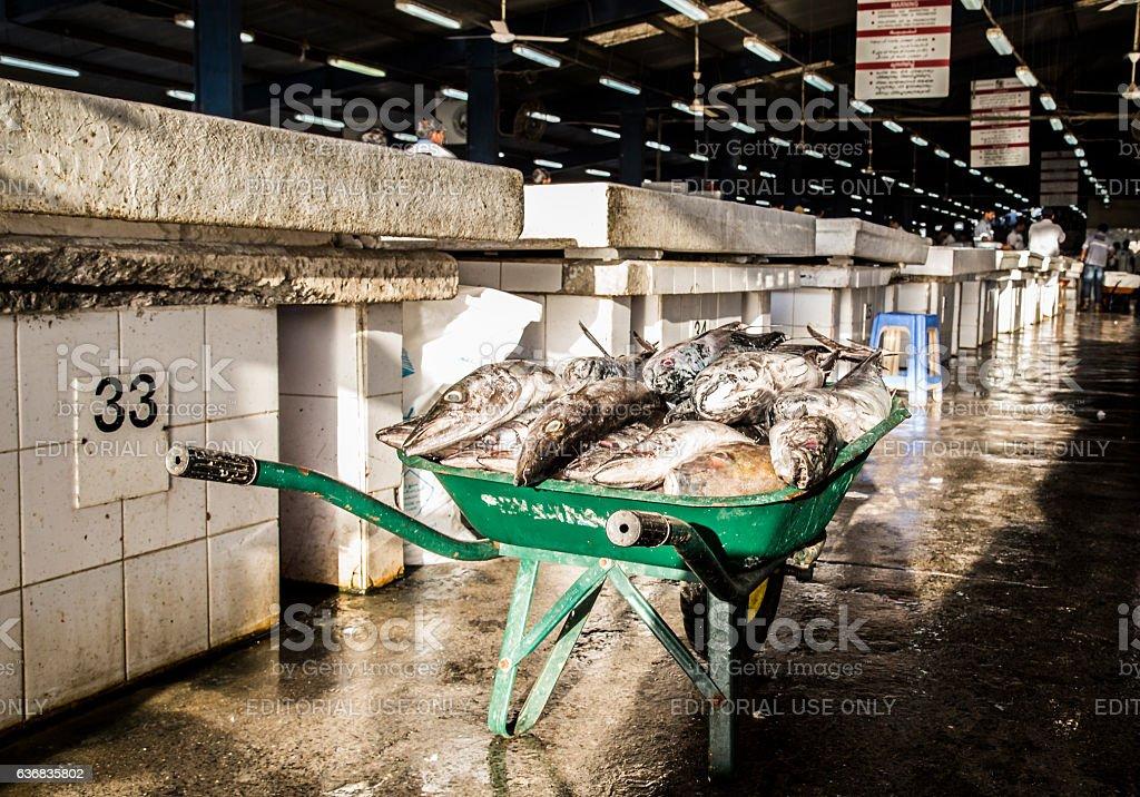 Wheelbarrow of Swordfish, waiting to be sold off. stock photo