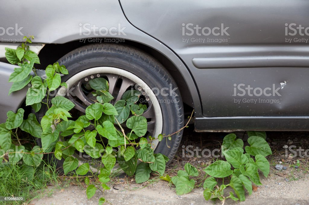 Wheels covered with ivy stock photo