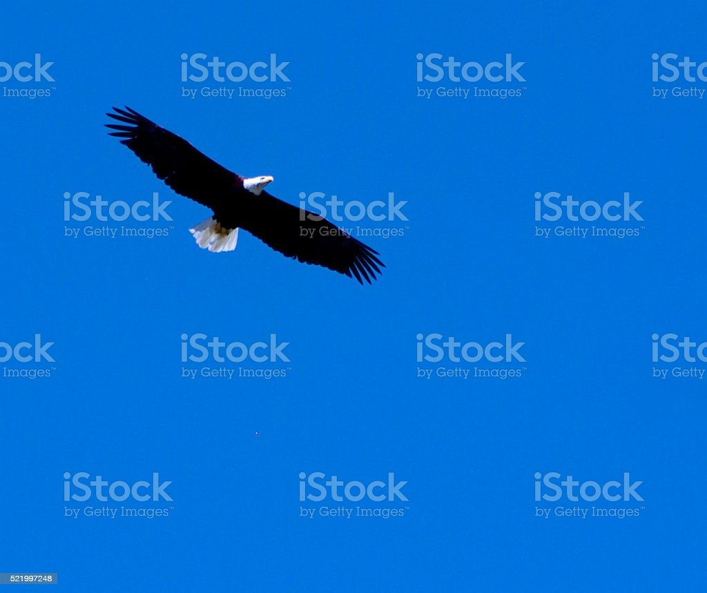 When Eagles Fly stock photo