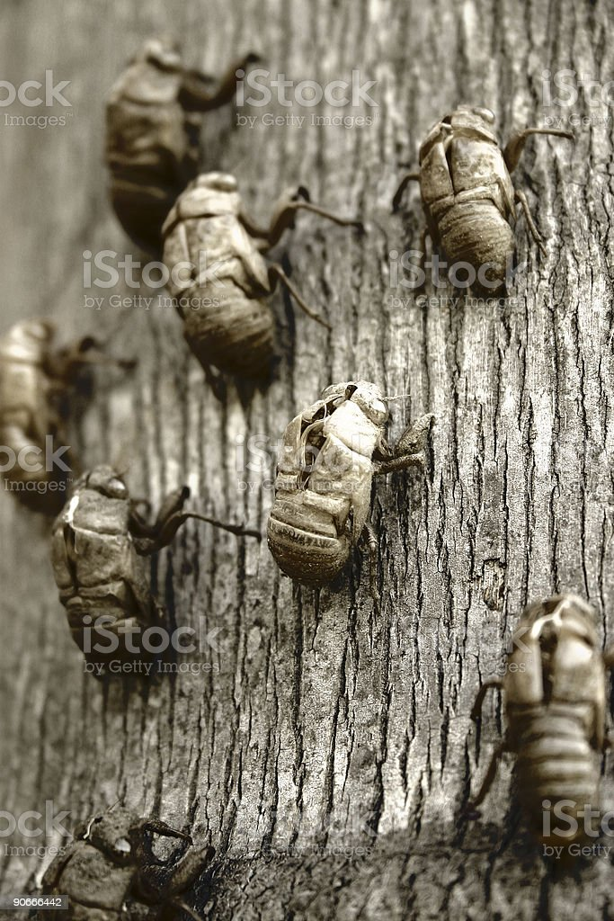 When Insects Attack royalty-free stock photo