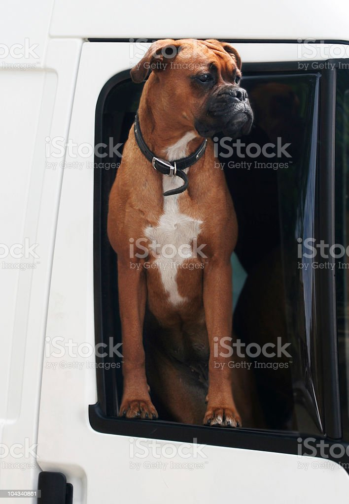 When is this traffic going to get moving royalty-free stock photo