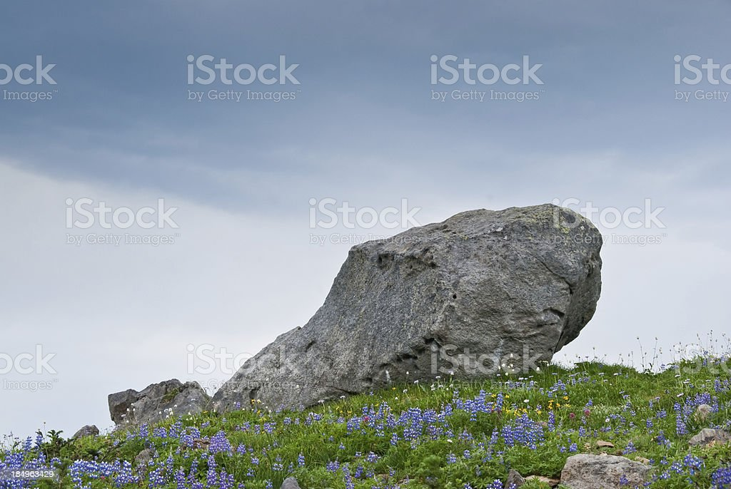 Large Boulder Deposited by a Glacier in an Alpine Meadow stock photo