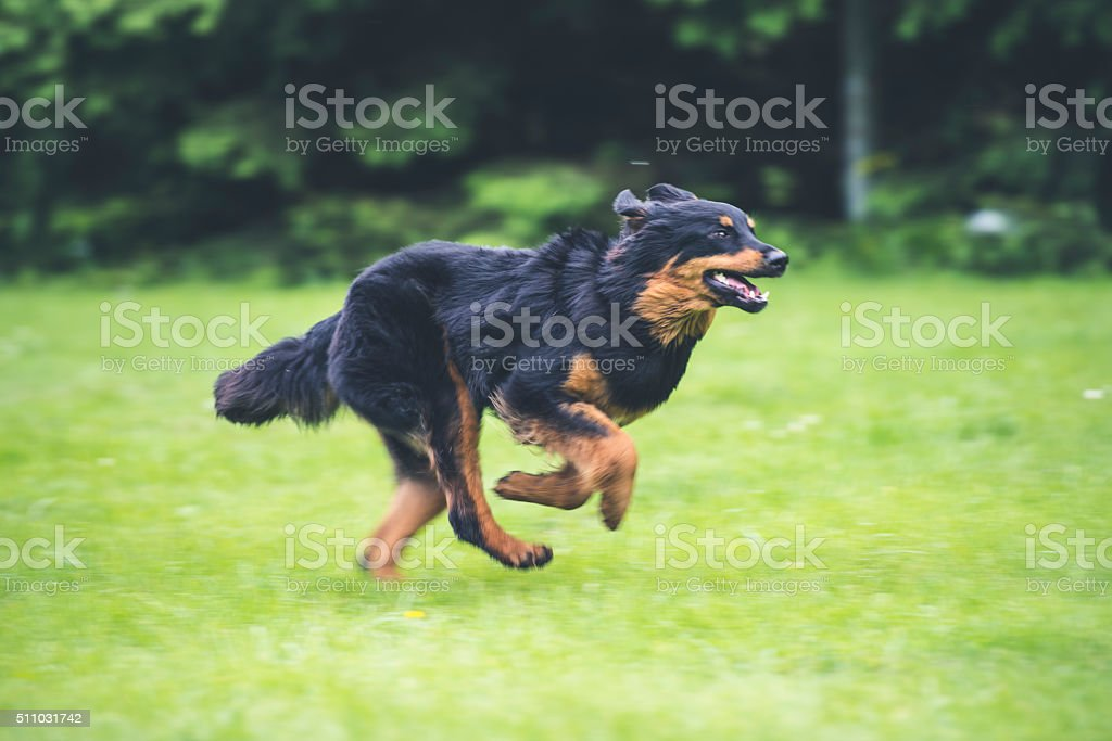 Where is my owner? stock photo