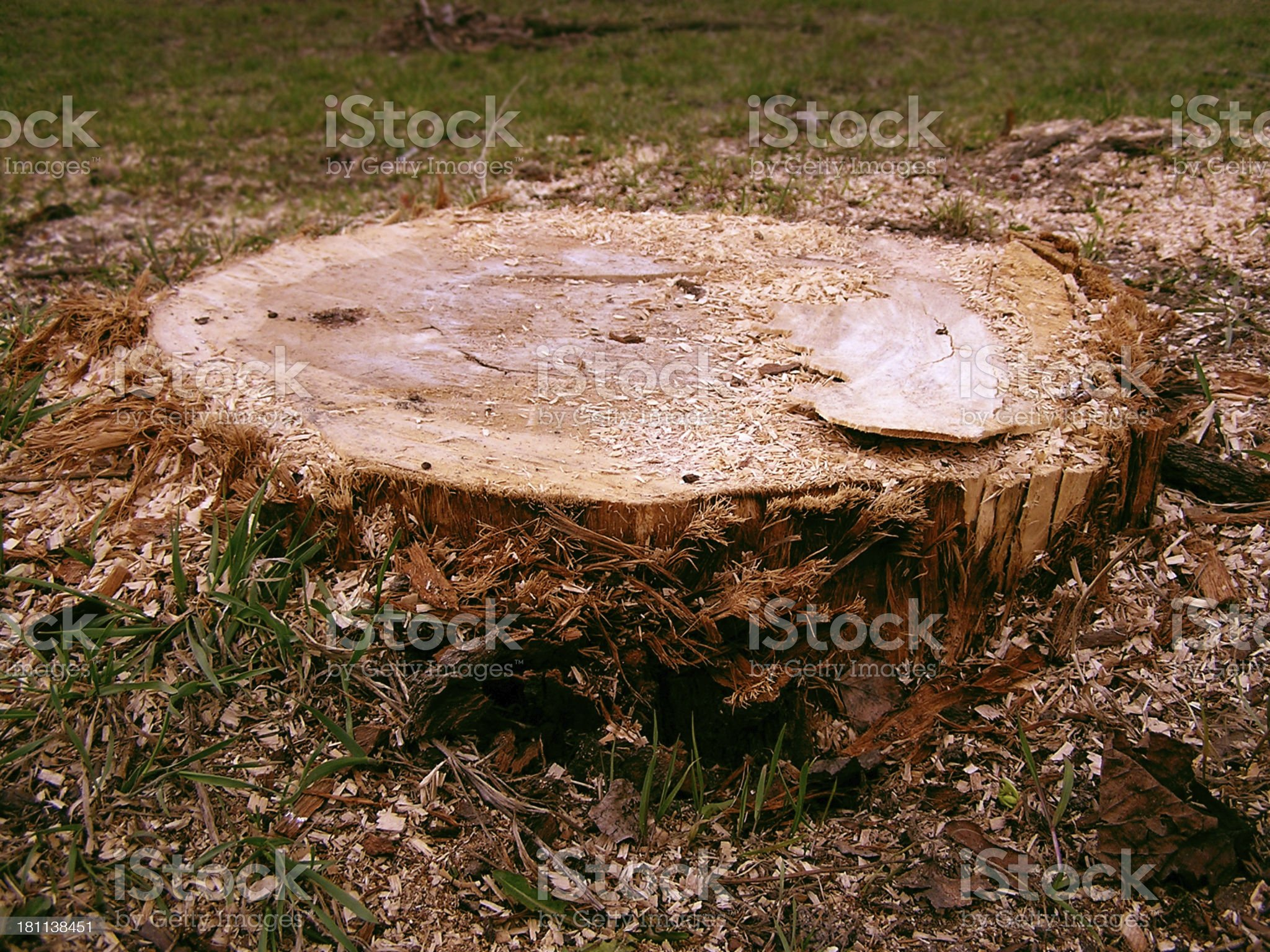 Where is the tree? royalty-free stock photo