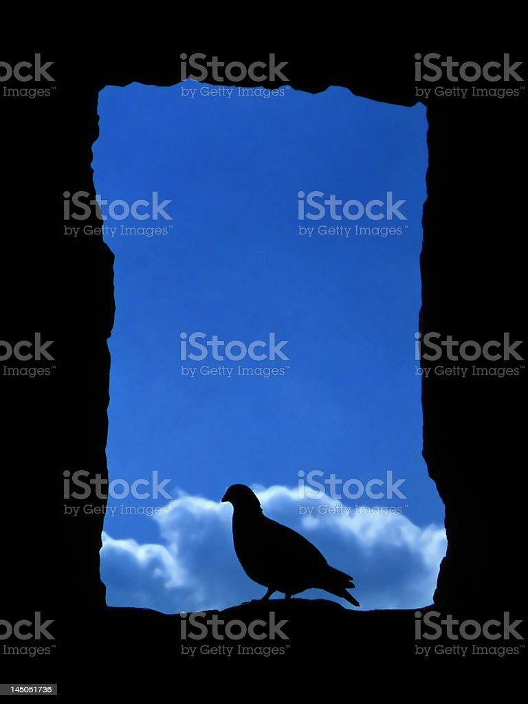 dove royalty-free stock photo
