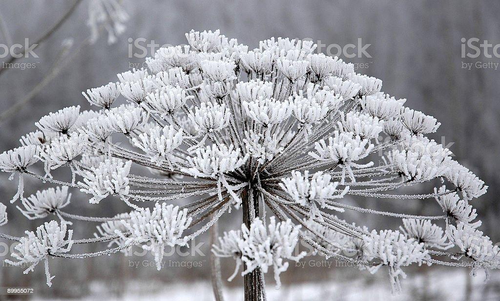 Où flocons de neige sommeil photo libre de droits