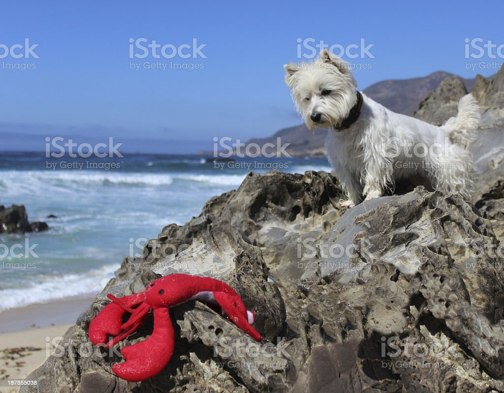 Where's the Lobster? stock photo