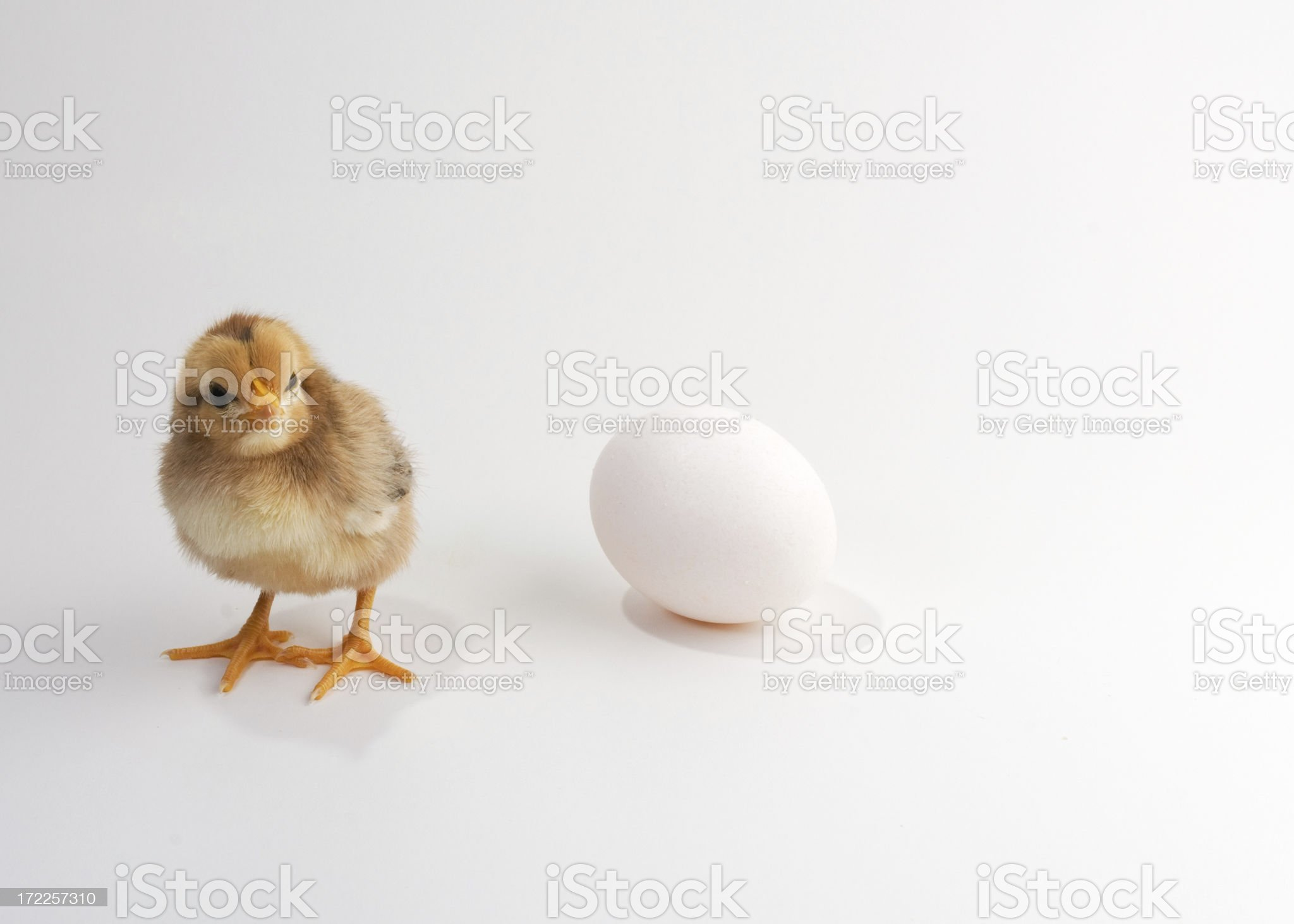 Which Came First? royalty-free stock photo