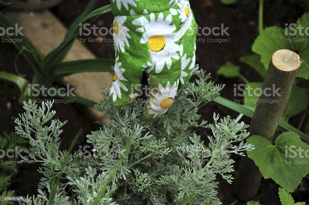 While gardening royalty-free stock photo