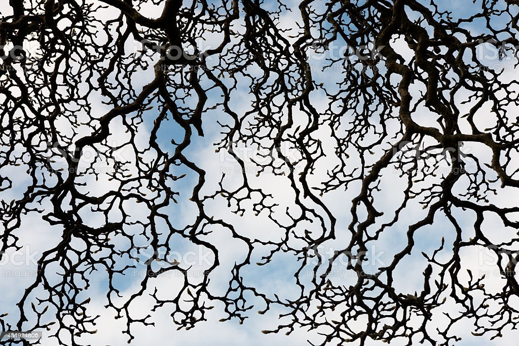Whimsical pattern of magnolia tree branches stock photo