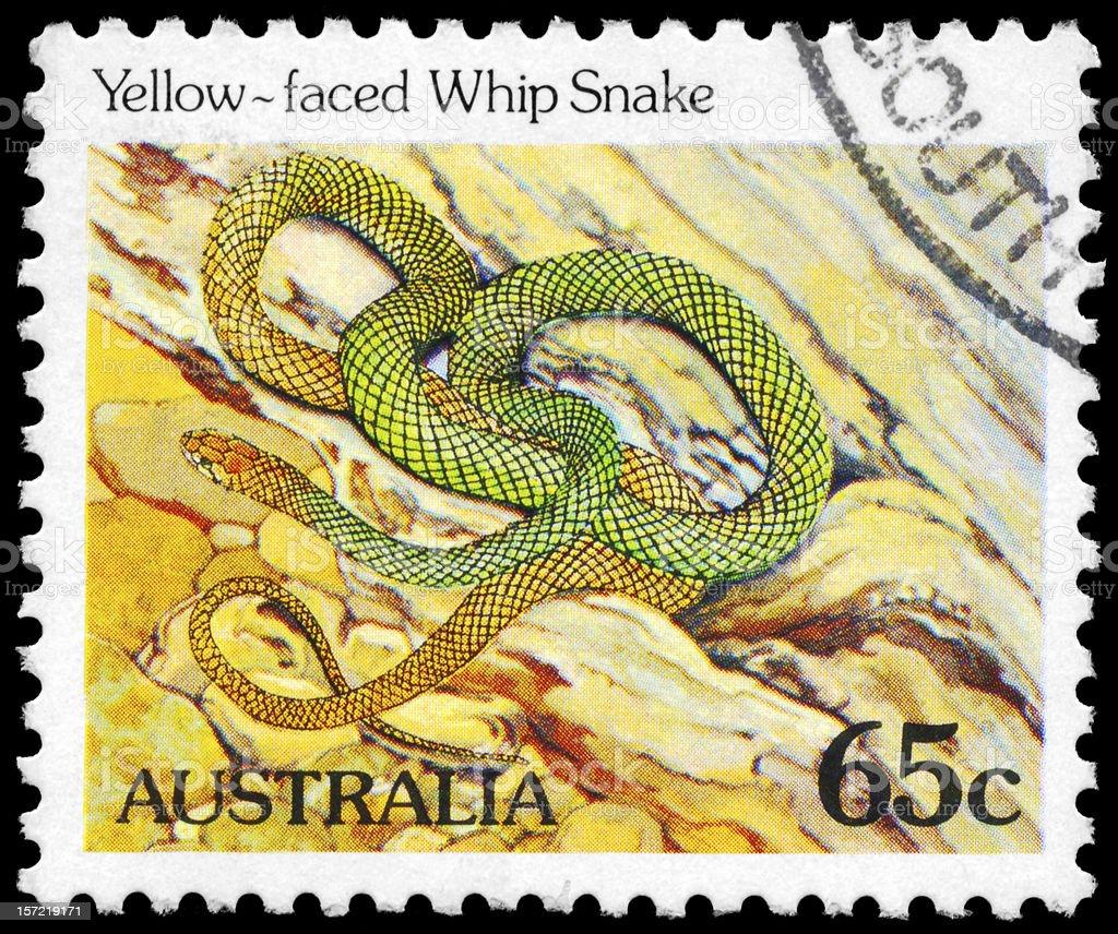 Whip Snake stock photo