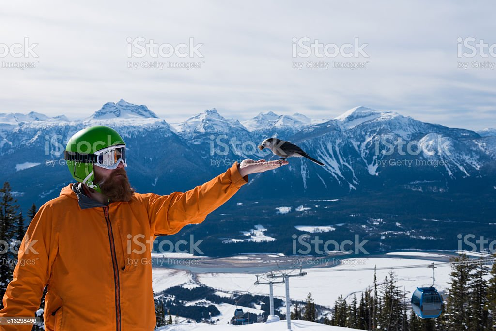 Whiskey Jack at Revelstoke Mountain Resort stock photo