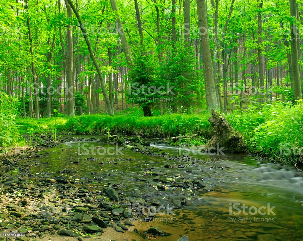 Whispering Stream royalty-free stock photo