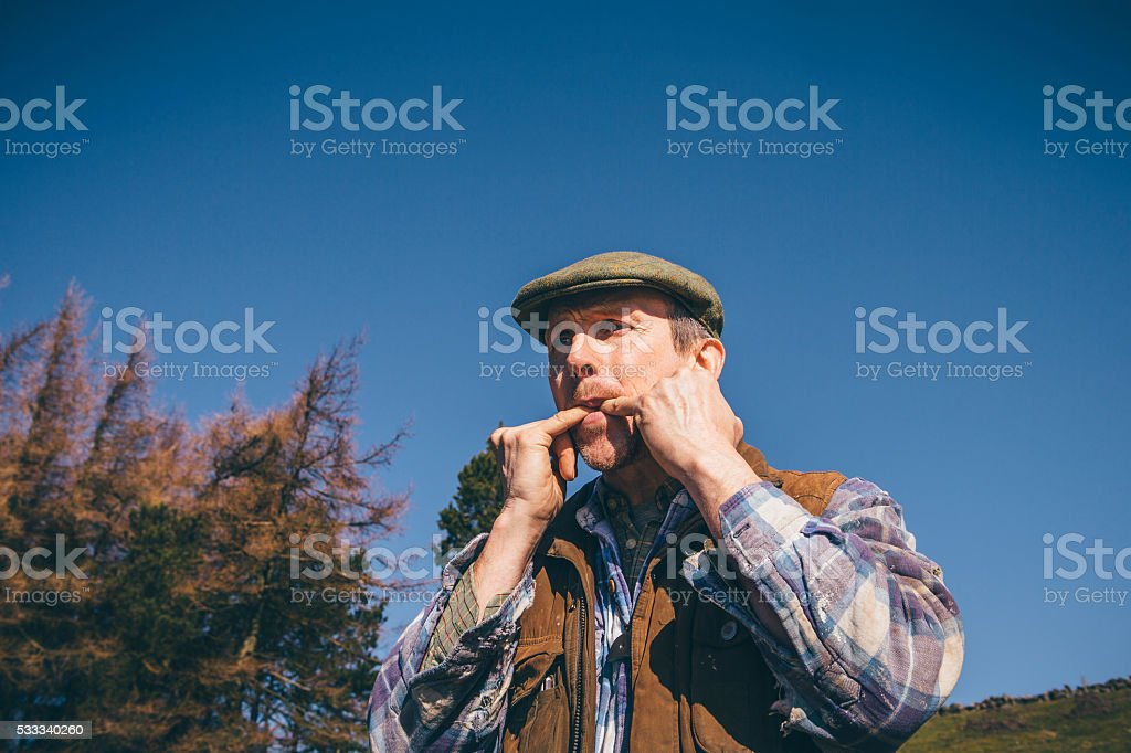 Whistling for the Sheepdog stock photo