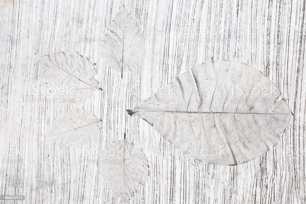 White abstract background with tropical plants shapes. Skeletones of leaves imprint on concrete floor as decoration. stock photo