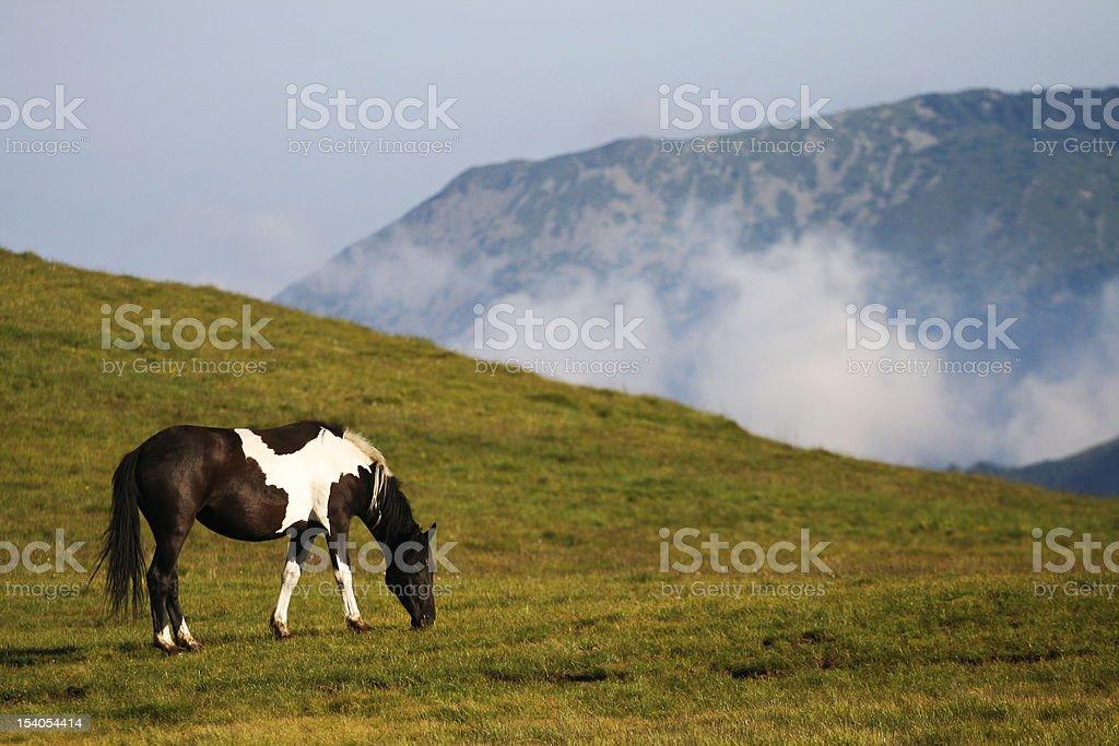 White and black horse on mountain stock photo