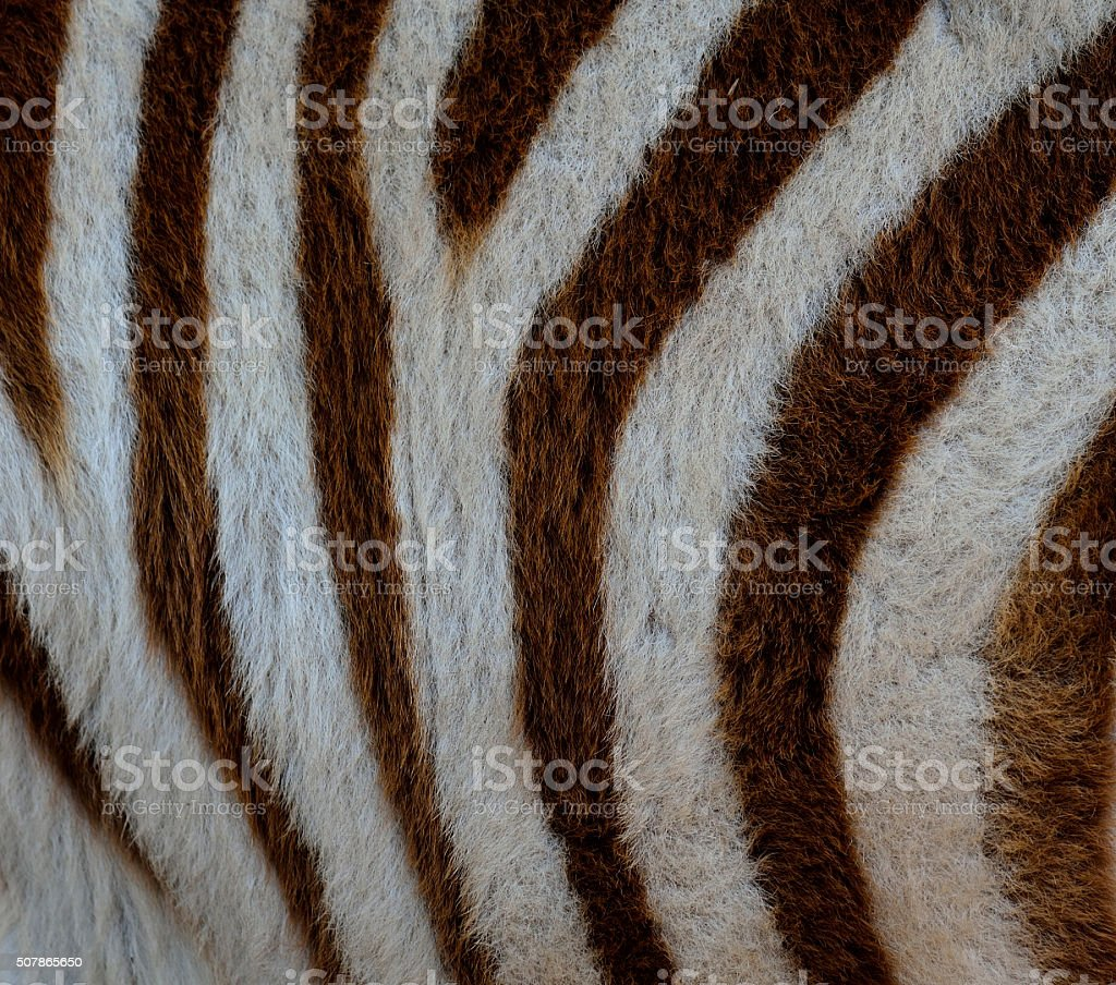 White and Brown Camouflage background pattern of zebra fur textu stock photo