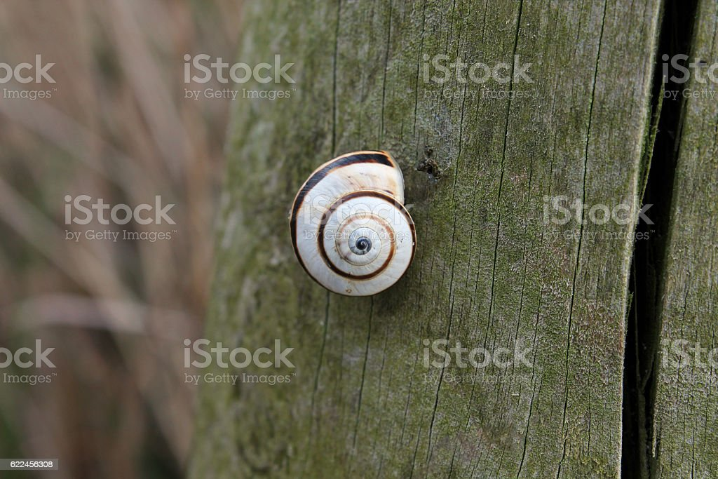 White and brown snail in the wood fence stock photo