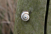White and brown snail in the wood fence
