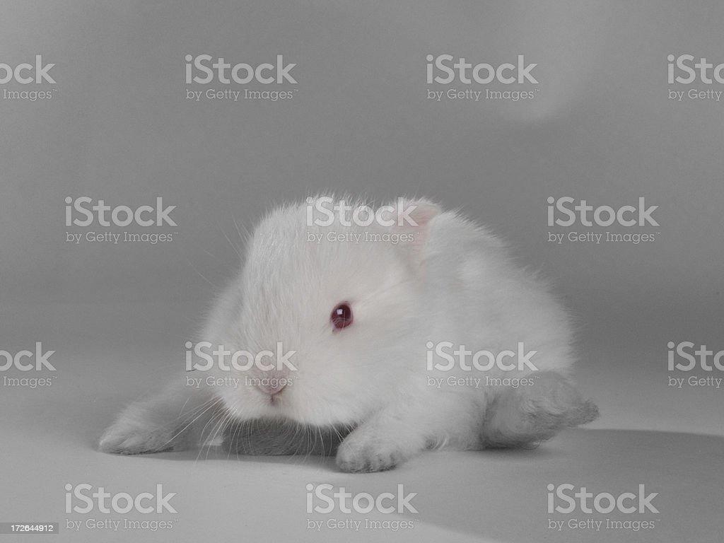 White and fuzzy stock photo