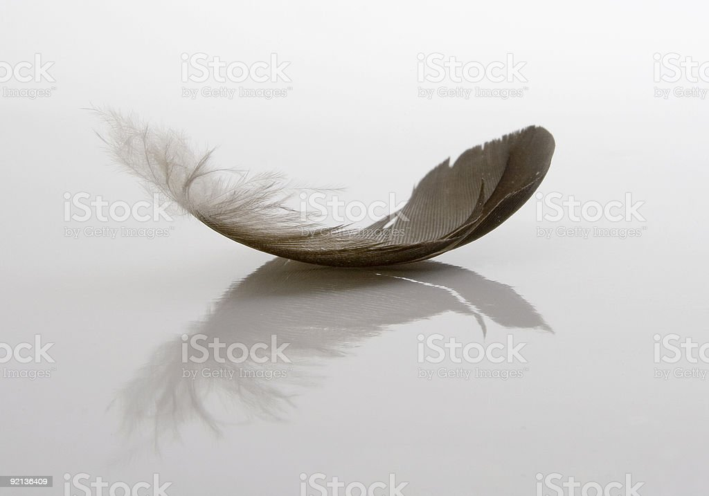 White and grey single feather on white background royalty-free stock photo