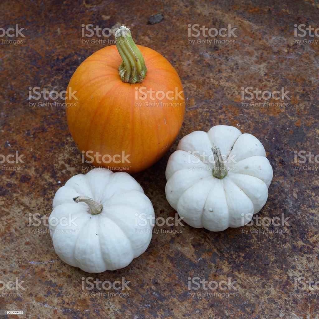 White and Orange Pumpkins in Rusty Wheelbarrow stock photo
