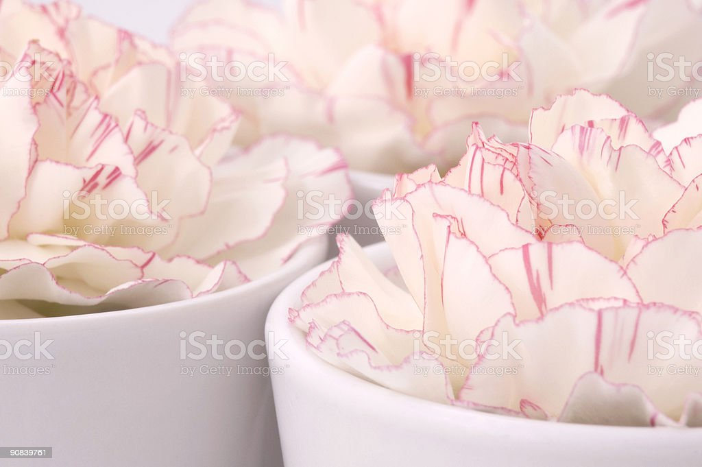 white and pink royalty-free stock photo