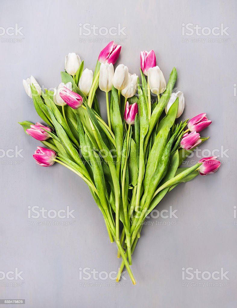 white and pink tulips Bouquet on gray wooden background stock photo
