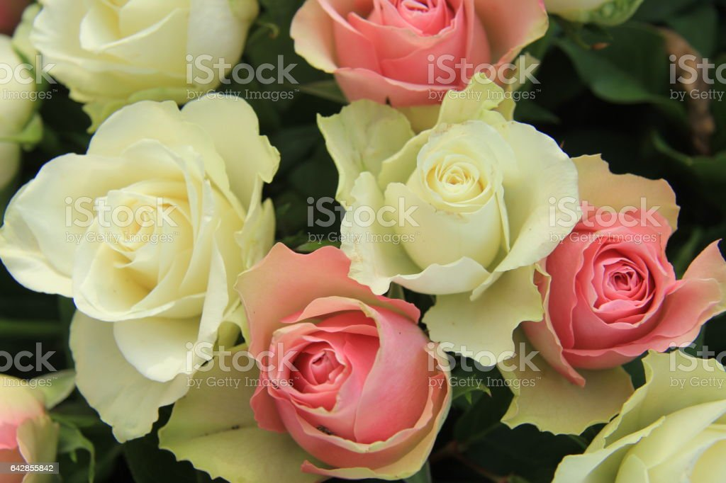 White and pink wedding roses stock photo