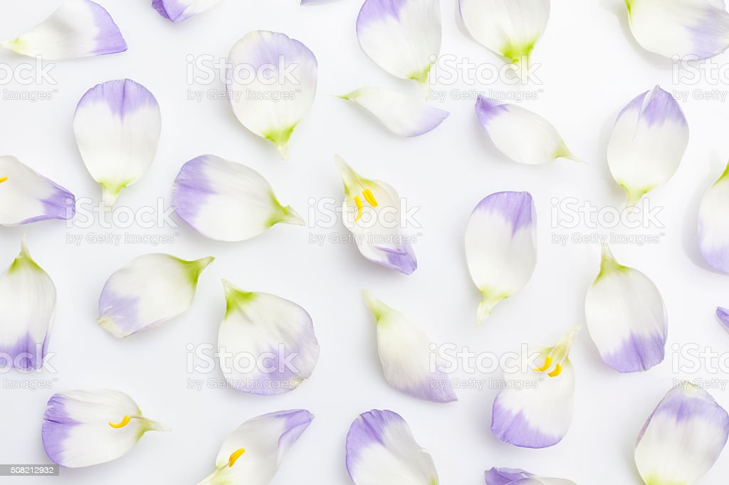 White and purple petals on white from above stock photo