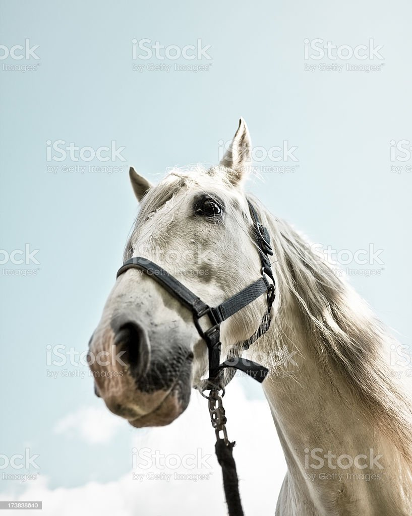 white andalusian horse in the sky royalty-free stock photo