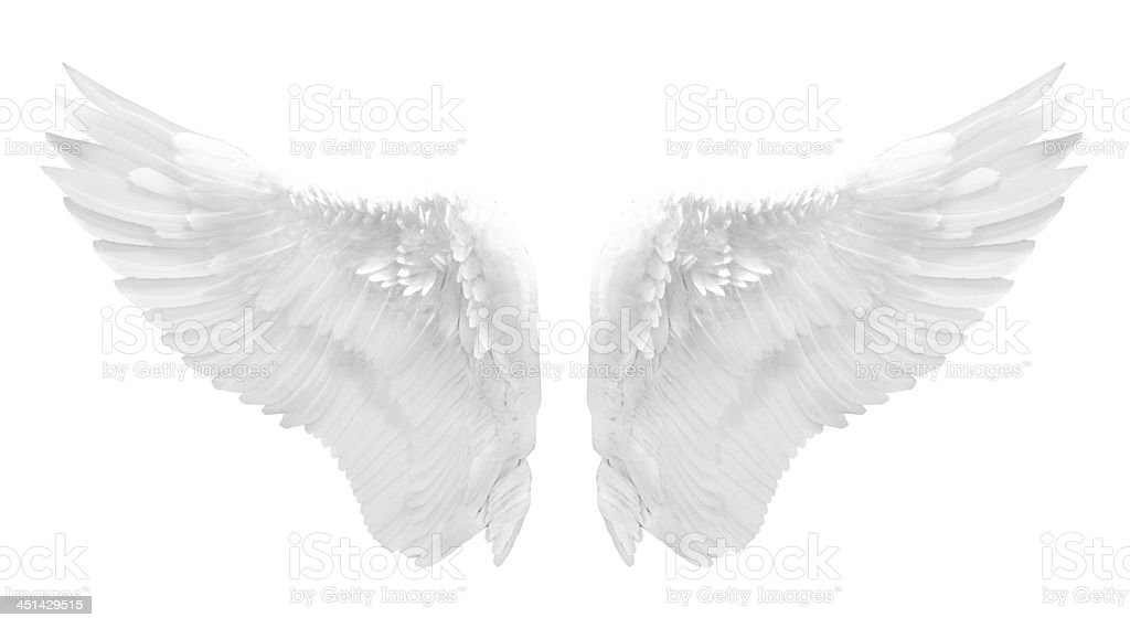 white angel wing isolated stock photo