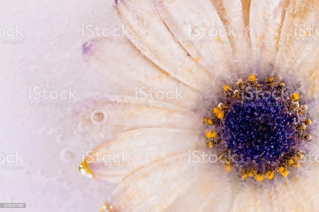 White as snow stock photo