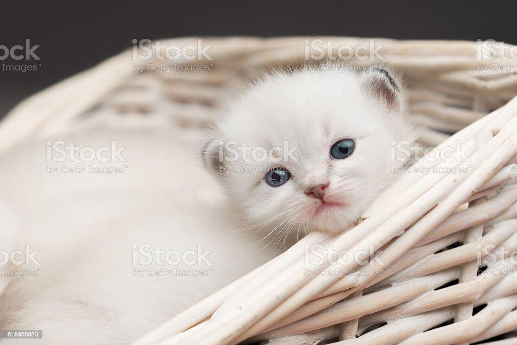 white baby cat stock photo