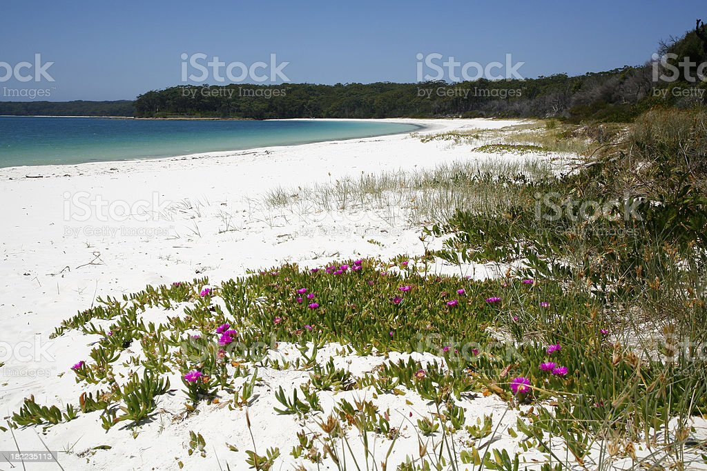 White beach, pink flowers, aqua sea royalty-free stock photo