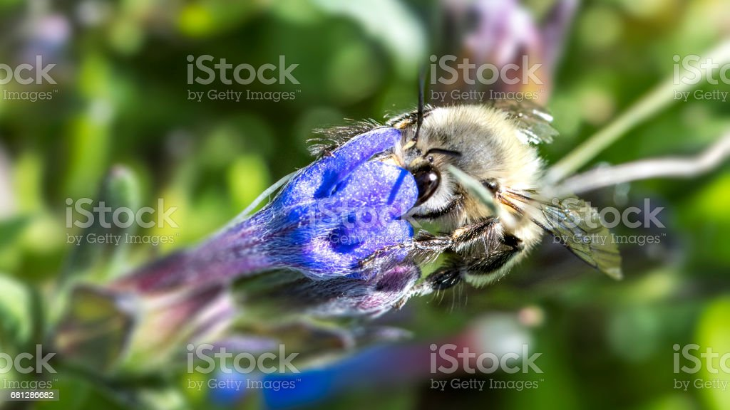 White Bee on Flower stock photo