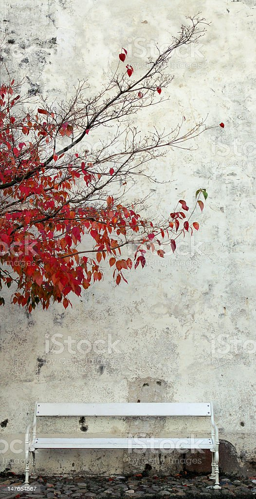 white bench and autumn tree royalty-free stock photo