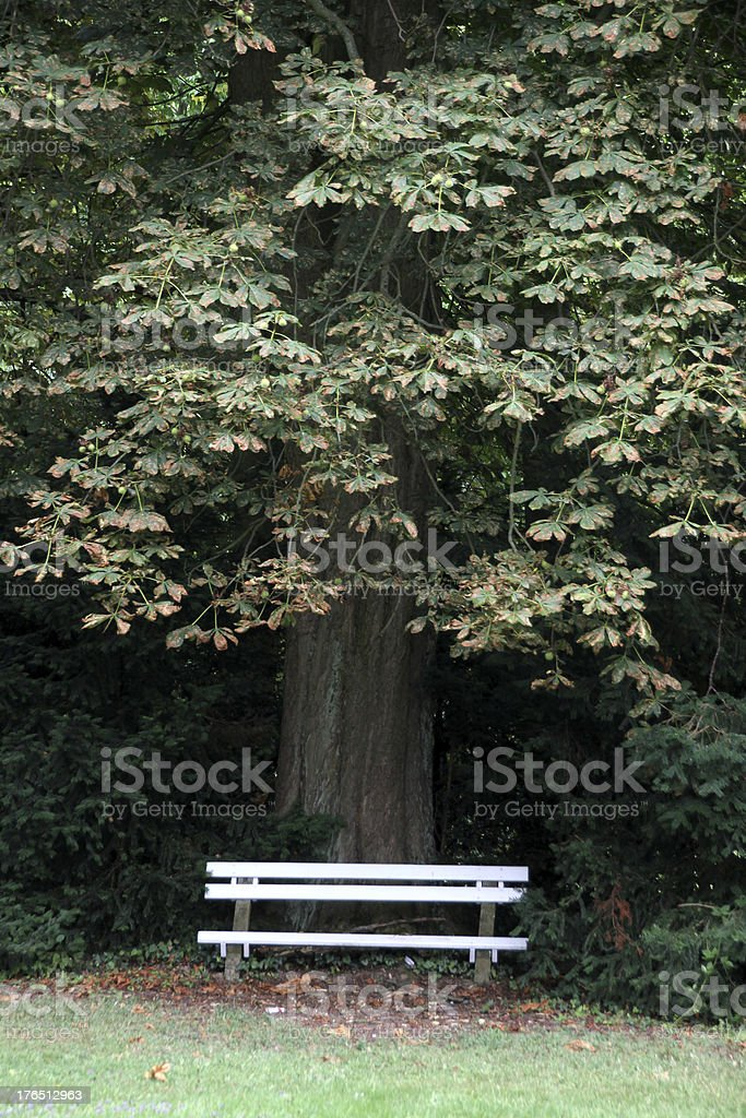 White bench under a chestnut tree stock photo