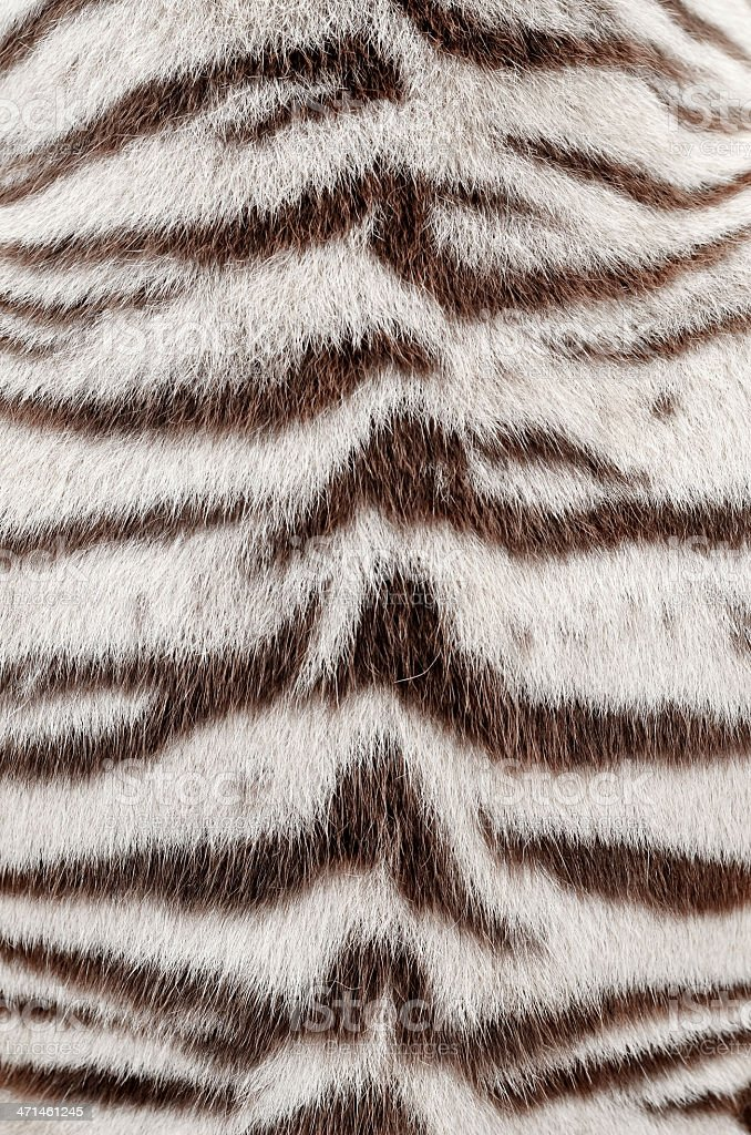 white bengal tiger fur stock photo