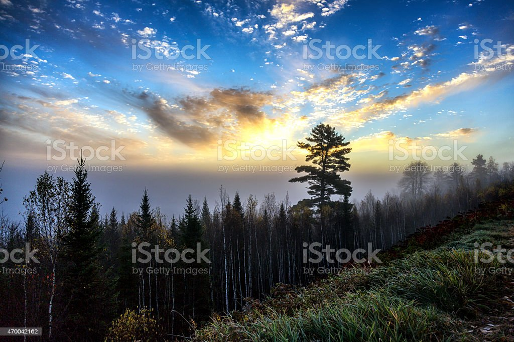 White Birch and Evergreen Forest Sunrise - New England USA stock photo