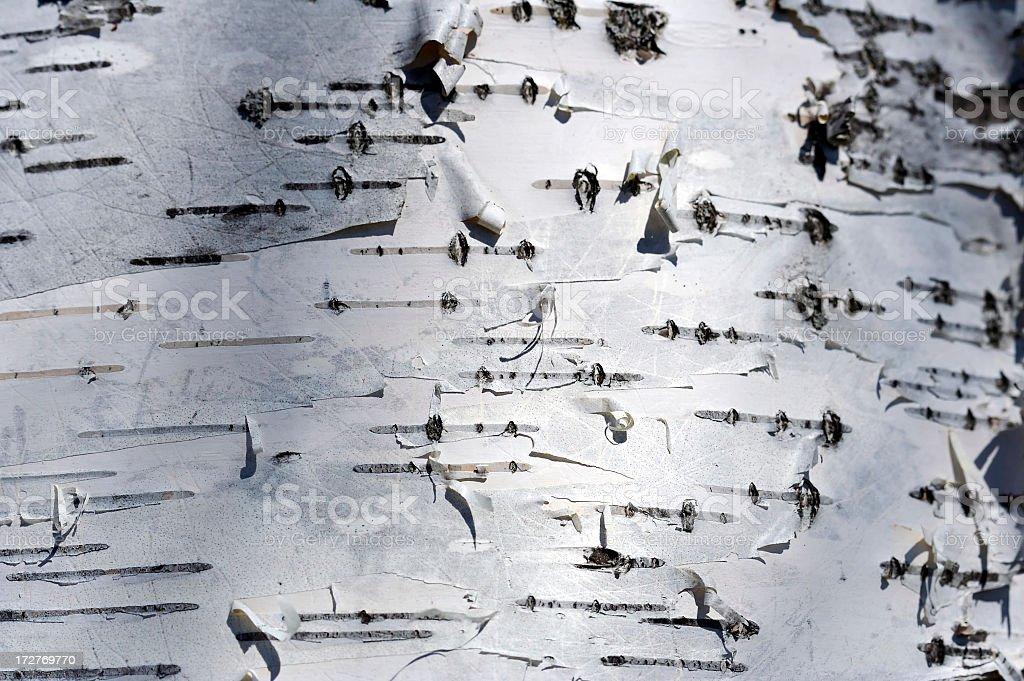 White Birch Background royalty-free stock photo