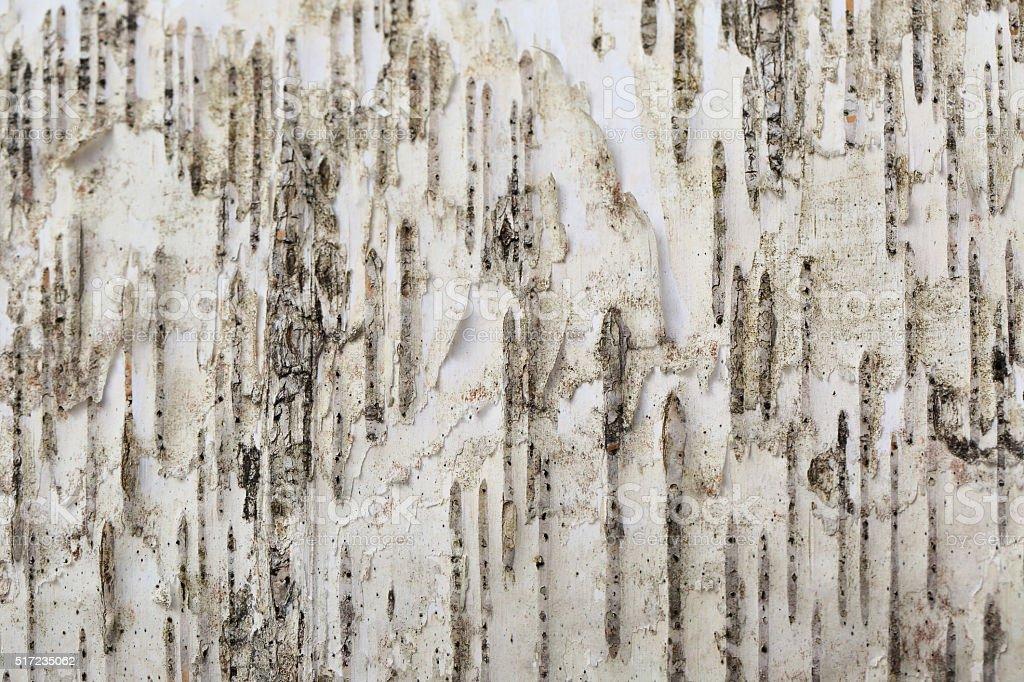 White birch background stock photo