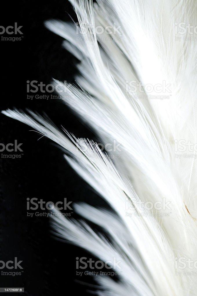 White Bird Feather stock photo