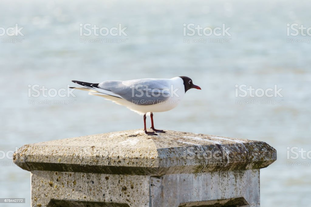 White bird resting on the wall stock photo