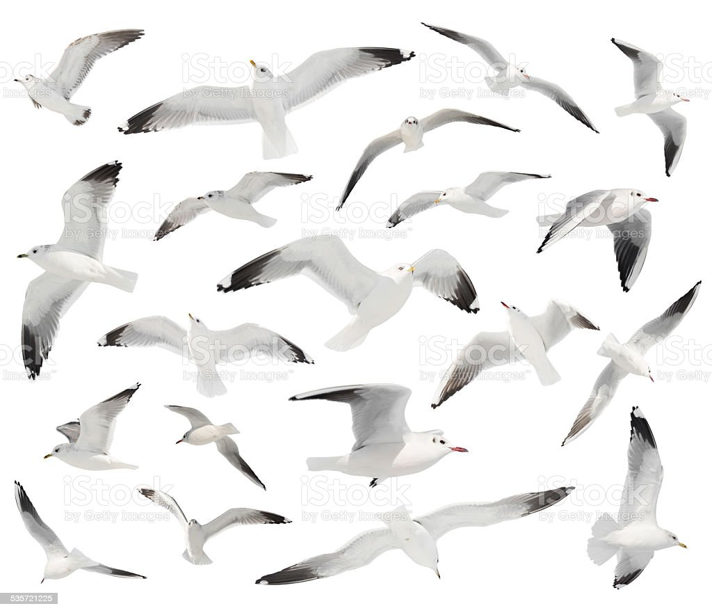 white bird set isolated stock photo