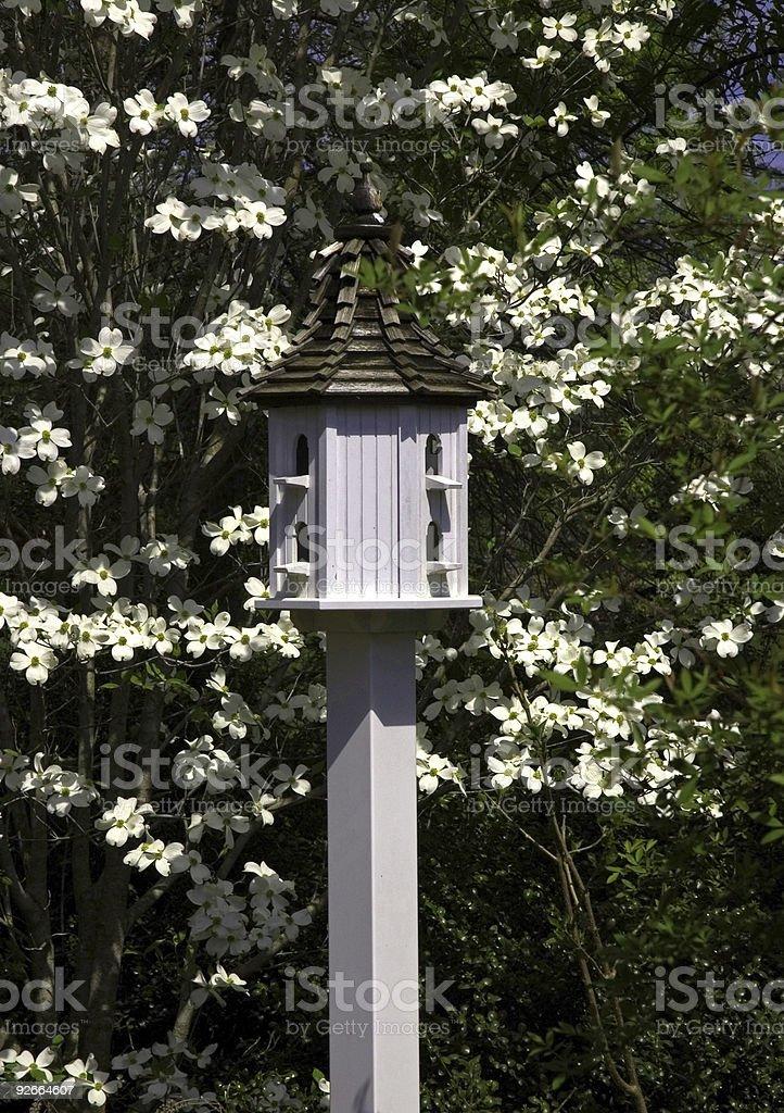 White Birdhouse in Dogwood royalty-free stock photo