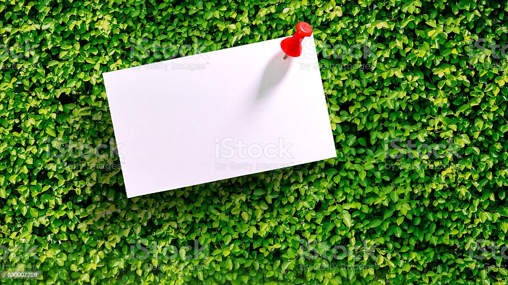 White Blank notepad on the green bush stock photo