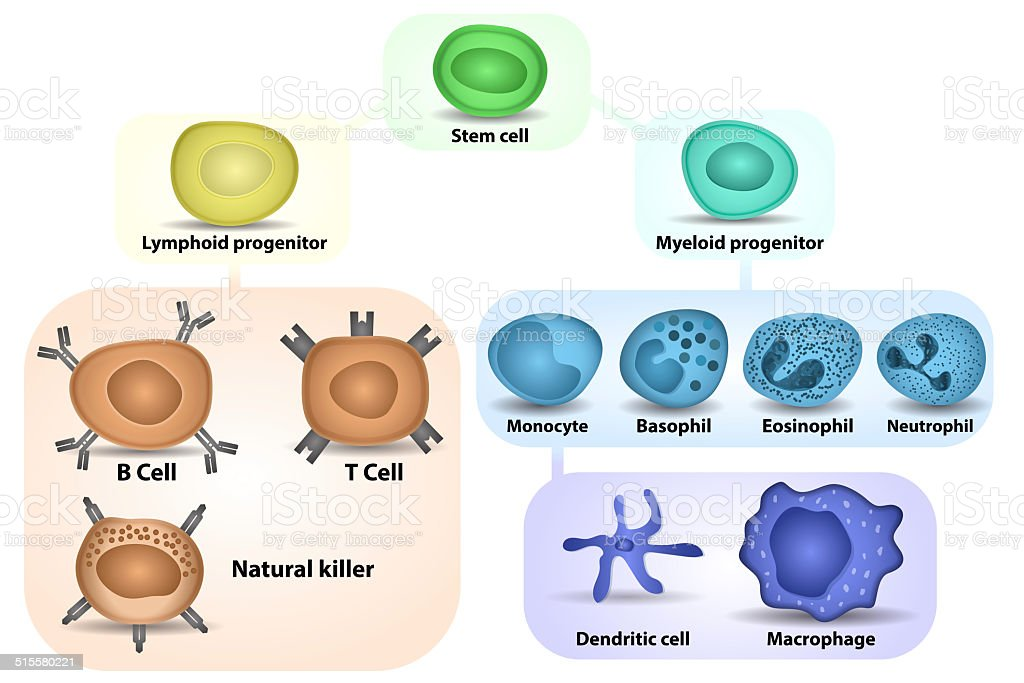 White Blood cell formation stock photo
