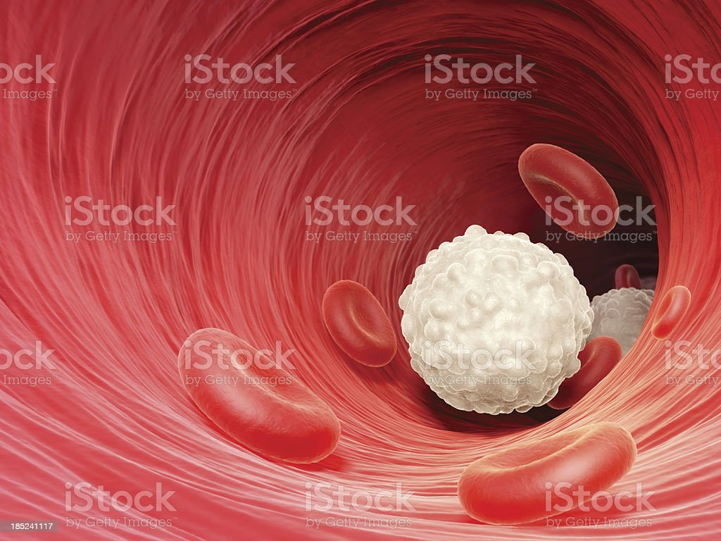 White blood cell stock photo