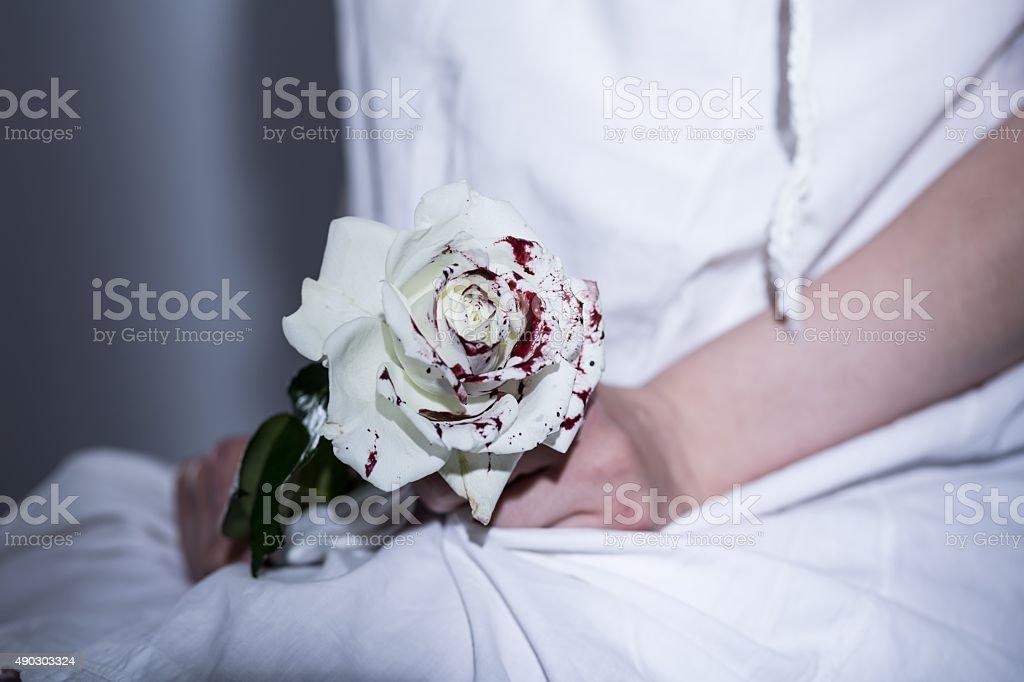 White bloody rose stock photo